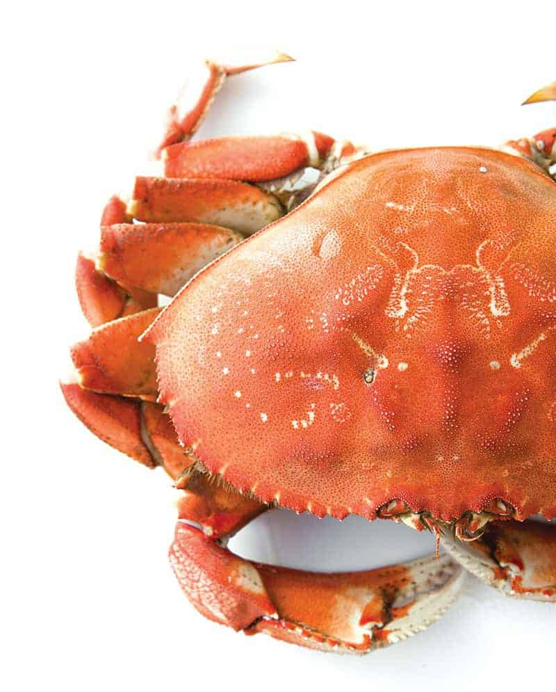 dungeness crab for cioppino