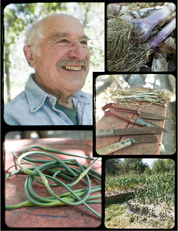 chester aaron garlic farmer