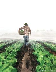 lettuce farmer by dan bransfield