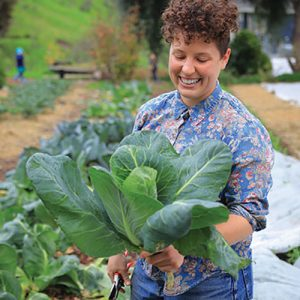 alemany farm cabbage