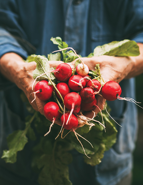 eat local handful of radishes