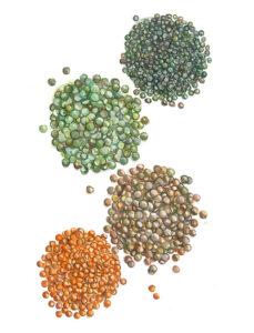 lentils super food