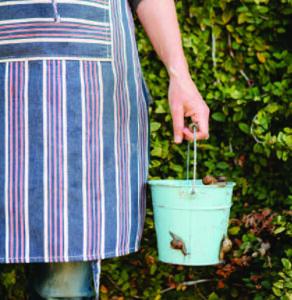 Garden snails in a pail